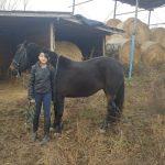 Ló, lovas, háttérben a szénabálák és a fedett rész a lovaknak.