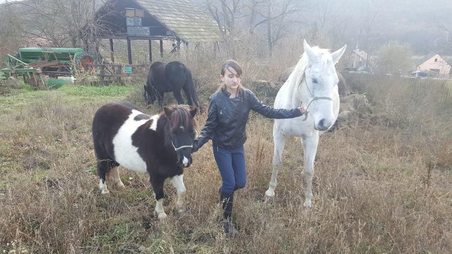 Egy kislány vezet egy fehér lovat és egy pónit