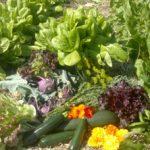 Vegyszermentes zöldségek