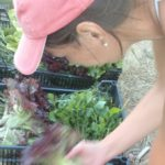 Egy hölcs ládákba teszi a leszüretelt zöldségeket.