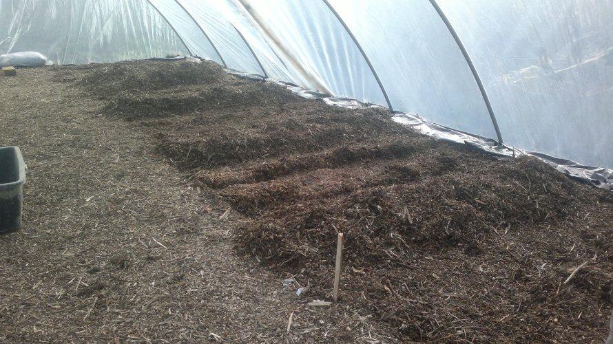 Fóliás termesztés előkészítése
