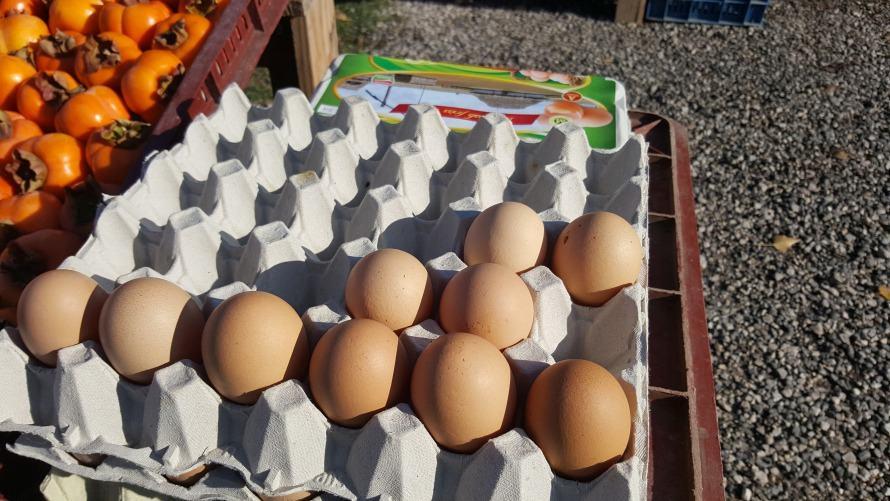 Tojások nagy tojástartóban